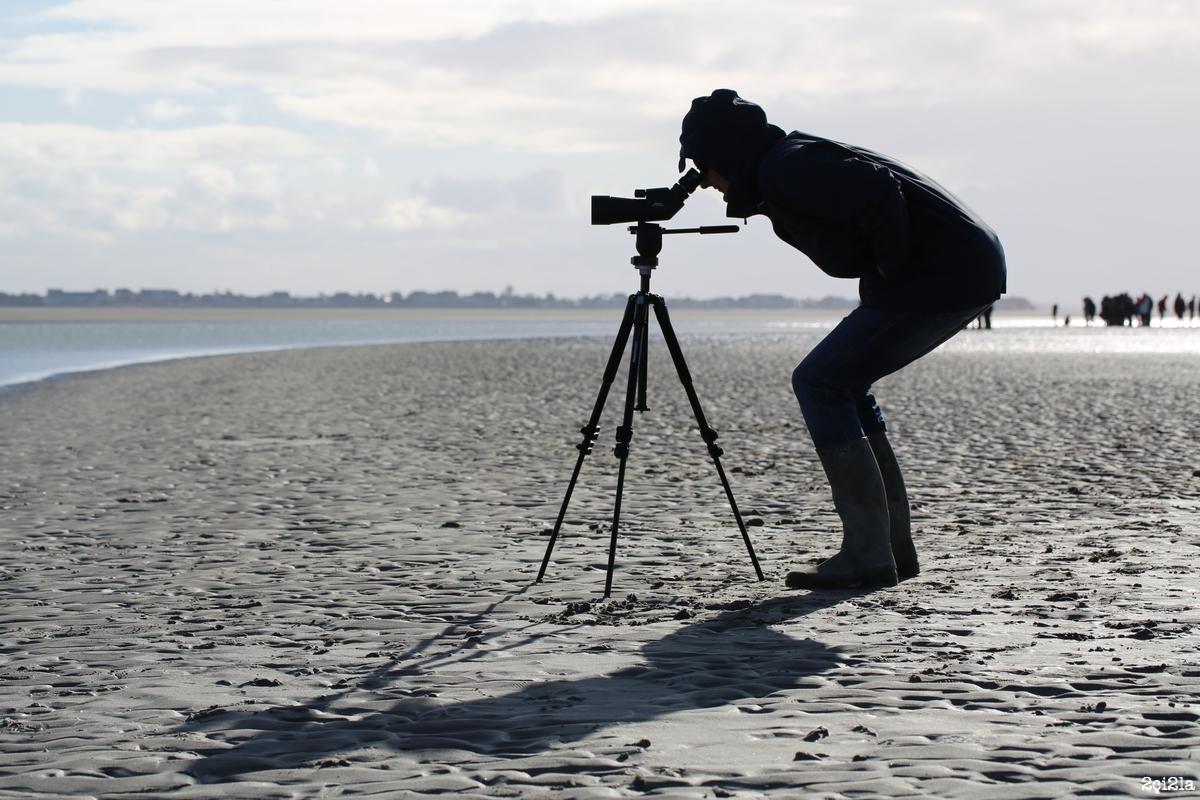 A la rencontre des phoques. Balade sur les sables du Hourdel. Avril 2016