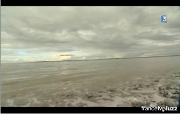 Dernier lâcher de phoques en baie de Somme