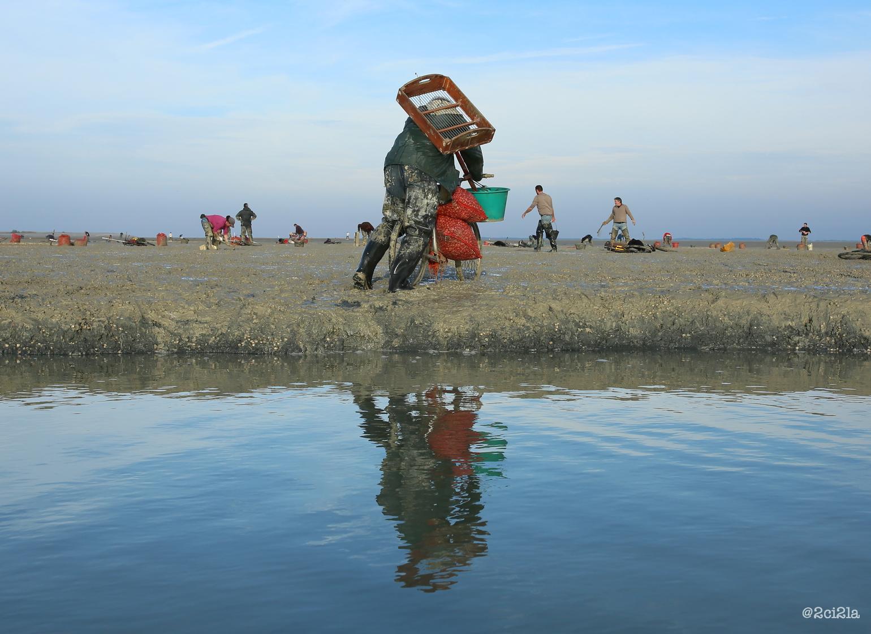 Gisement de coques du Hourdel. Cayeux-sur-mer . Décembre 2016