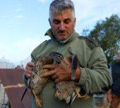 Salon des migrateurs : l'événement chasse