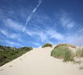 Sortie nature : les plantes du littoral